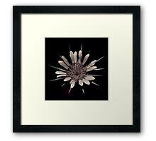 Desert daisy Framed Print