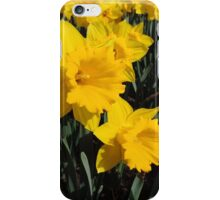 Daffodil Festival - Rydal, New South Wales iPhone Case/Skin
