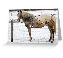 A pretty horse Greeting Card