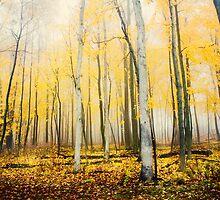 Autumn fog by jenndiguglielmo