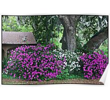 Backyard Azalea Bushes Poster