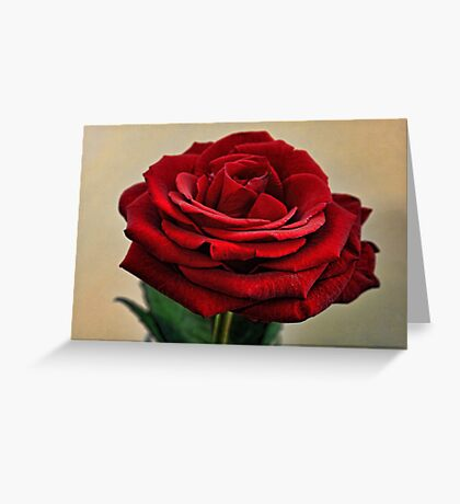 My Love is like a Red Red Rose Greeting Card