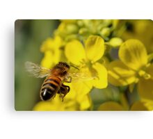 Bee Free Canvas Print