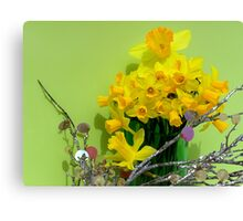 Family Of Dafodils Canvas Print