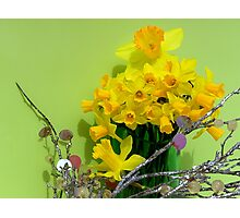 Family Of Dafodils Photographic Print