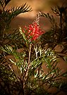 """""""Grevillea On Show"""" by Heather Thorning"""