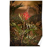 """Grevillea On Show"" Poster"