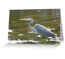 Wynmoor Heron, Florida Greeting Card
