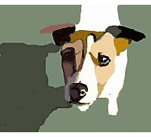 Jack Russel in the sun Photographic Print