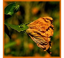 The Beauty Of Aging ~ Part One Photographic Print