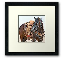 Competition Trained  Framed Print