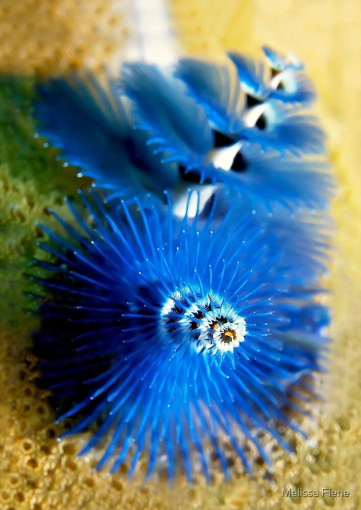 Christmas Tree Worm by Melissa Fiene