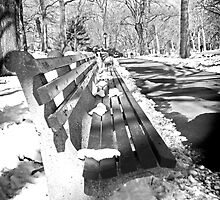 Central Park Bench by Melissa Fiene