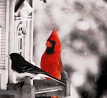 Birds of Ohio by Marcia Rubin