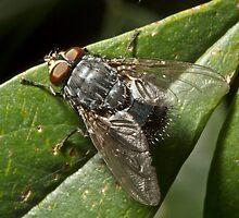Fly by Colin  Ewington