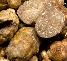 Oregon White Truffles # 3 by OrPhotoJohn