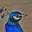Pretty Blue!!! by Larry Trupp