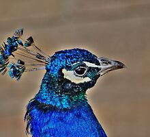 Pretty Blue!!! by Larry Trupp
