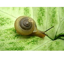 Little Snail Photographic Print