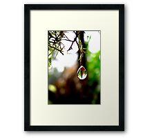 Nature's Drop Framed Print