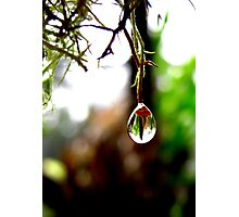 Nature's Drop Photographic Print