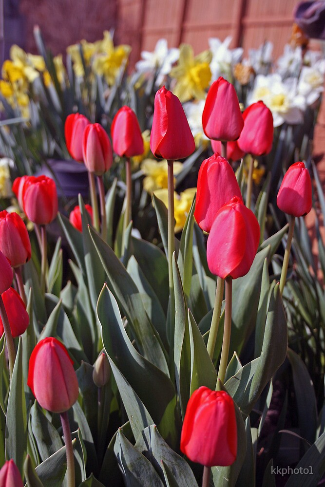 Garden Of Springtime Blooms by kkphoto1