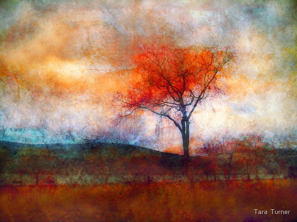 Alone in Colour by Tara  Turner