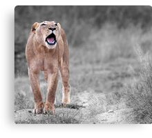 The Roar Canvas Print