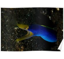 Blue Ribbon Eel Poster