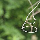 wisteria... by dabadac