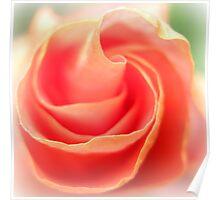Soft Rose Petals Poster