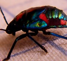 Beaut Bug - Rainbow bug  by mandyemblow