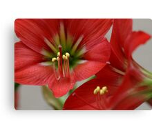 Floral Lilly  Canvas Print