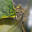 The Dragonfly having a snack  by janfoster