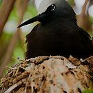110312 Noddy in nest by Jaxybelle