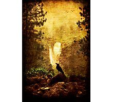 Felt Mountain Photographic Print