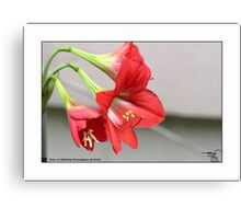 Lilly _ Red  Canvas Print