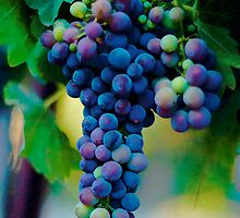 Merlot perhaps... by Kimberly Kay Spies
