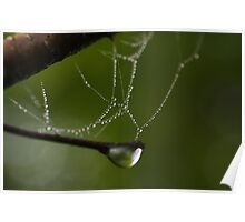 dew drops on cobwebs Poster