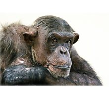 Chimpanzee Portrait Photographic Print