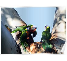 Parrot Bullies Poster