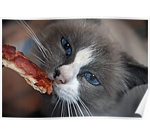 """Does Your Kitty Love Pizza Too ?"" Poster"