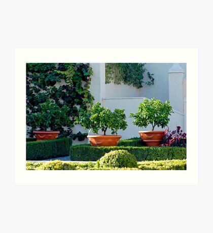 Hamilton Gardens New Zealand  -Italian Renaissance Garden Art Print