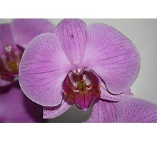 Sogo Cherry Orchid Photographic Print