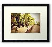 Vintage Vines Framed Print