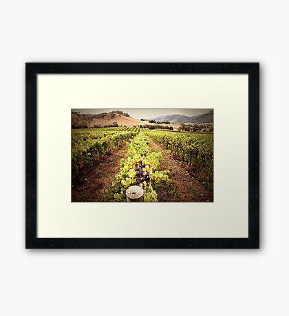 A Mudgee Vineyard Framed Print