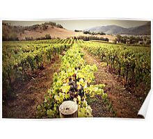 A Mudgee Vineyard Poster