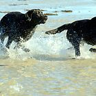The boys have always chased the girls by Alan Mattison