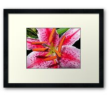 """Lily"" Framed Print"