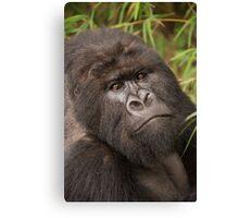 Close-up of silverback gorilla looking at camera Canvas Print